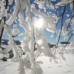 The sun peeps through frosty branches on the Black Forest mountain of Schauinsland.Photo: Patrick Seeger/dpa