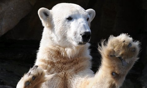 Knut autopsy 'most in-depth' in animal world