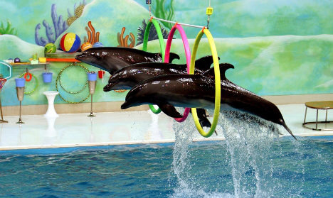 TUI dolphin show ban is for Germans only