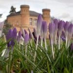 Crocuses blooming in the botanical gardens at Karlsruhe, Baden-Württemberg on Sunday.Photo: DPA