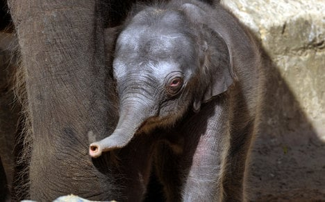 Zoo trumpets fifth baby elephant success