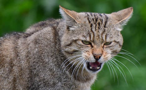 Wildcats claw their way back from brink of doom