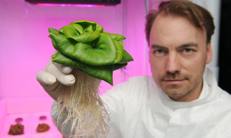 Scientists hope to grow salad in space