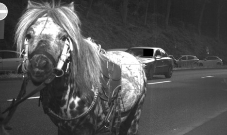 Horse caught on speed camera saves driver