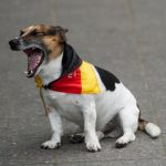 A patriotic canine spotted on Berlin's Kurfürstendamm appears less excited about the win than most.Photo: DPA