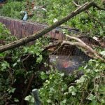 A tree fell on a garden shed in Düsseldorf killing three and injuring another three.Photo: DPA
