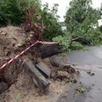 An uprooted tree in GelsenkirchenPhoto: DPA