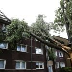 Homes were damaged by this tree in Recklinghausen, North Rhine-Westphalia. Photo: DPA