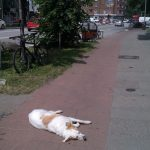 And it isn't always inanimate objects that spoil bike riders' fun. Here, a dog lounges in the way.Photo: thingsonbikelanes/tumblr