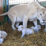 Mother Princess growls at photographers taking too close an interest in her litter.Photo: Photo: DPA