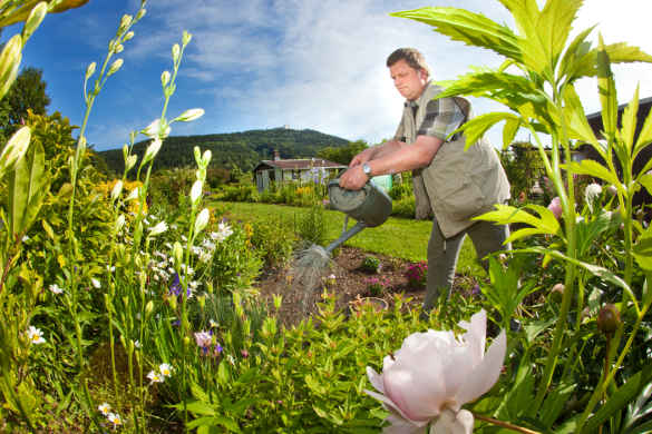 'Garden rage' and rules rock allotment idyll