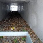 Schorndorf's toad tunnel: the Stuttgart government built six tunnels, a metre wide, 80 centimetres high and ten metres long, for toads under regional road 1147. Unfortunately the toads are disappearing and foxes – predators of the toads – can fit into the tunnels easily.Photo: Bund der Steuerzahler