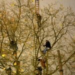 The hunger strikers took to the trees after dozens of officers cleared out Sendlinger Tor in Munich following concerns the refugees could get hypothermia in dropping temperatures.Photo: DPA