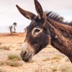 <b>Ride a donkey:</b> If anything, the journey on a donkey's back could serve as a reminder that once upon a time, people got on without trains just fine. Those with insufficient donkeymanship can also opt for a horse-drawn carriage in tourist centres.Photo: Shutterstock