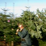 <b>Pick your tree:</b> It's time to claim the tree under which you'll be gathering come December 24, but don't be too eager to decorate it. Traditionally, the German Christmas tree stays bare until Christmas eve. Photo: DPA