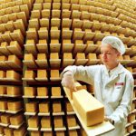<b>Holsteiner Tilsiter</b> – this classic German cheese, made both in wheels and blocks, is ripened for six months before it's ready to eat. Relatively soft and moist, it often has grain-sized holes. Depending on the batch it can taste quite mild or very strong.Photo: DPA