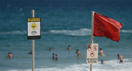 German tourist killed in shark attack in Egypt
