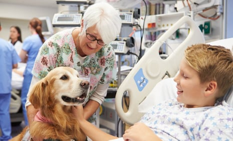 Paws for relief as hospital welcomes dogs