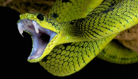 Police extract 'snake' from salad bowl