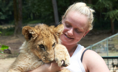 Lion cub raised in living room leaves home