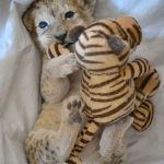 Malor was born on Ferbuary 9th but had to be raised by zookeepers when his mum rejected him.Photo: Photo: DPA