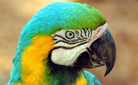 Firemen save parrot, owner from 20m perch