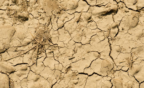 Sweltering summer has climatologists sweating