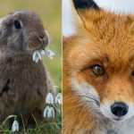 """<b>3.""""Wo sich Hase und Fuchs gute Nacht sagen"""" (""""where the hare and the fox say goodnight"""")</b> Look at those two cuties. Can't you just imagine them giving each other a long, loving farewell at the end of the night? No?  We can't either. Maybe that's why they like to do it in secret. This phrase translates to something like """"in the middle of nowhere."""" Photo: Photo: <a href=""""http://bit.ly/1LkiRLt"""">Tambako The Jaguar</a> / flickr"""