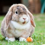 """<b>7.""""Da liegt der Hase im Pfeffer!"""" (""""there's the rabbit in the pepper!"""")</b> Similar to the """"hair in the soup"""" which featured in our<a href=""""http://bit.ly/1MesP0t"""">list of food idioms</a>, your rabbit in the pepper is the one problem spoiling your otherwise flawless plan.  No, we don't get it either. I mean, we can't imagine this little cutie being unwelcome in any scenario. Photo: Photo: Pixabay"""