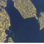 Fields in bloom in the Mecklenburg Bay (Mecklenburger Bucht) on Germany's north-eastern coast.Photo: Nasa