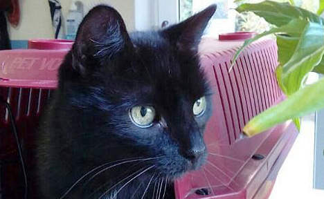 Tomcat missing for ten years finally comes home