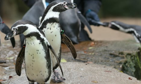 Dortmund zoo suffers second mystery death