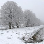 <b>Fog and frost in a forest near Cuxhaven, Lower Saxony.</b>Photo: DPA