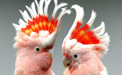 German city says 'nein' to woman's nine parrots