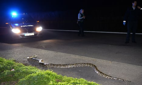 4-meter python discovered on south German road
