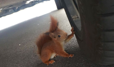 Police issue dispersal order to lairy squirrels