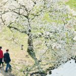 People walk under a tree in Maschpark in Hanover. Photo: DPA