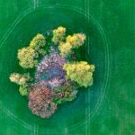A small water hole surrounded by trees in a field in Sieversdorf, Brandenburg.Photo: DPA
