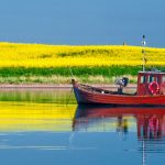 A fishing boat in front of a rape seed field.Photo: DPA
