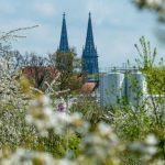 Trees come into bloom in front of Regensburg Cathedral.Photo: DPA