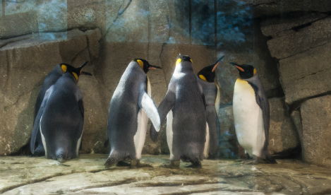 Gay penguins left in peace after breeding plans stall