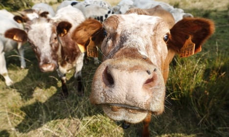 Lidl's cows are going on a GM-free diet
