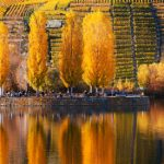 15 pics that prove Germany is totally enchanting in autumn