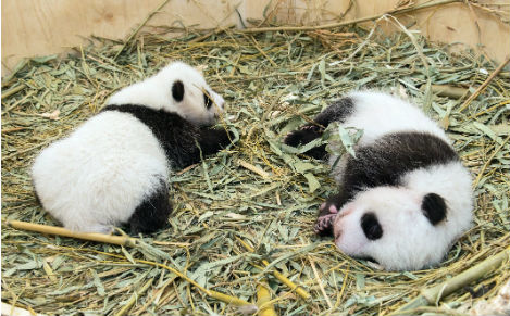 Berlin Zoo to have a pair of pandas by next summer