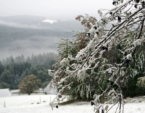 In pictures: Germany's first snowfall of the season