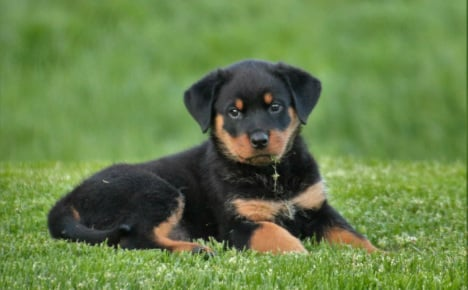 PICS: 11 utterly adorable dog breeds with German heritage