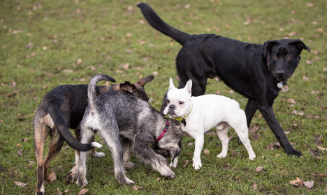 Hamburg dogs must be kept on leashes, as bird flu spreads