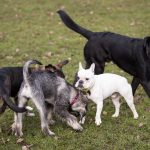German court can't bear to separate dogs after owners' divorce