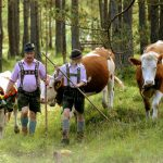 Bavaria must remain part of Germany, says top court