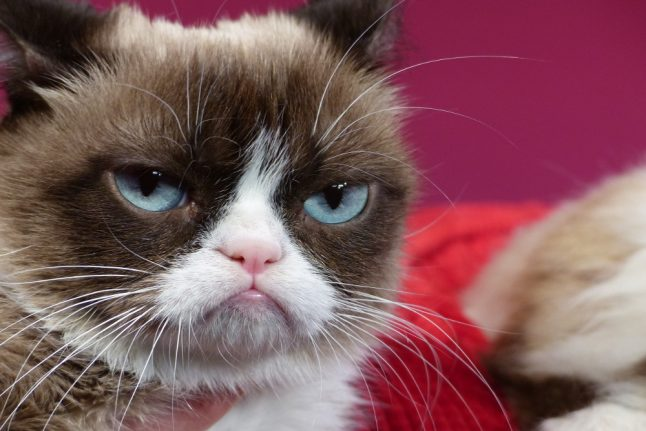 Here's why Grumpy Cat is in Berlin – and absolutely hates it